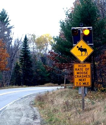 Maine moose crossing sign