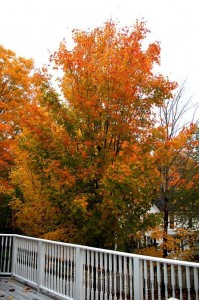 Fall colors at Brewster House Bed & Breakfast, Freeport, Maine (2007)