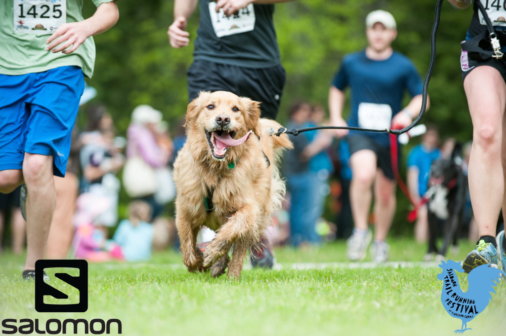 golden retriever running with a group of runners on grass