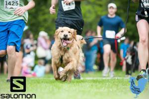 golden retriever running with a group of runners on grass