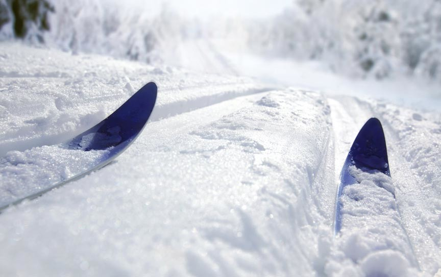 A pair of cross country ski tips gliding down a wandering snowy trail through the woods
