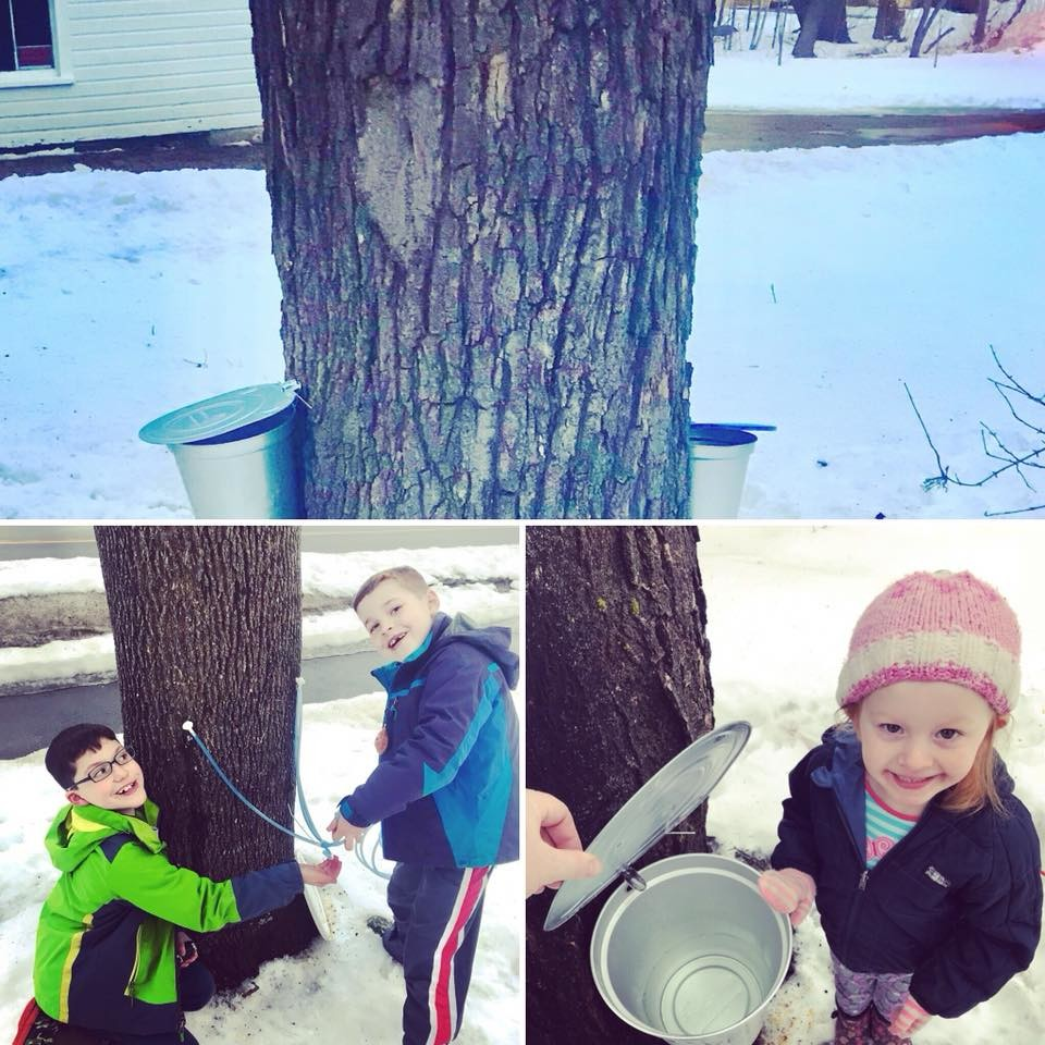 Kids Tapping Trees at the Brewster House