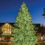 LL Bean Tree lit for Sparkle